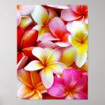 Flor de Havaí do Frangipani do Plumeria personaliz Posters