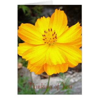 Flor de Jamaica que pensa de você cartão