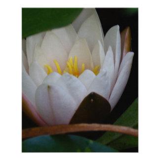 Flor de Lotus Panfleto Coloridos
