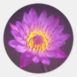 Flor de Lotus roxa Adesivo Em Formato Redondo