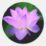 Flor de lótus roxa bonita na água adesivos redondos