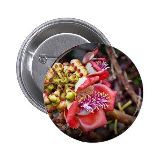 Flor de Sala da fruta da bala de canhão Botons