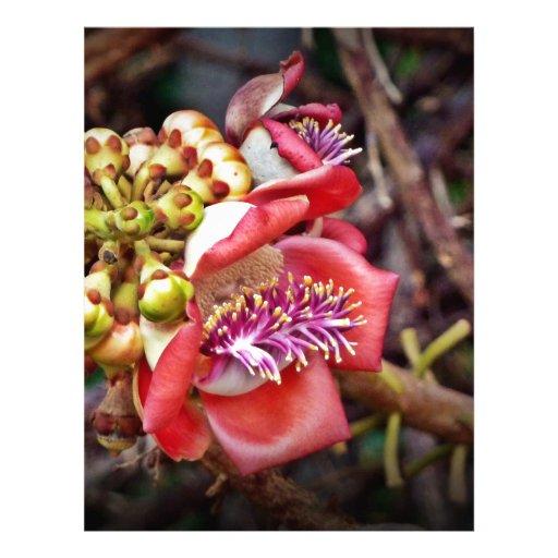 Flor de Sala da fruta da bala de canhão Modelo De Papel De Carta