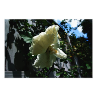 Flor de suspensão impressão de foto