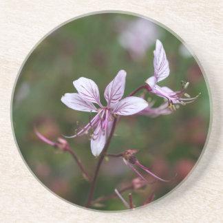 Flor de um arbusto ardente porta copos de arenito