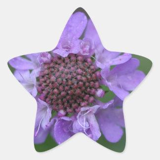 Flor de um lucida de Scabiosa Adesivo Estrela