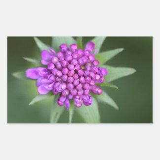 Flor de um lucida de Scabiosa Adesivo Retangular