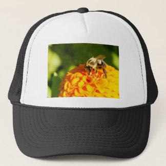 Flor do amarelo alaranjado da abelha do mel com boné
