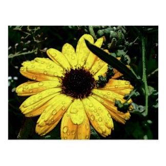 Flor do amor cartões postais