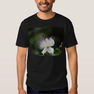 Flor do arbusto da alcaparra, Capparis spinos. Camisetas