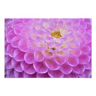 Flor do crisântemo que decora o local grave dentro impressão fotográficas
