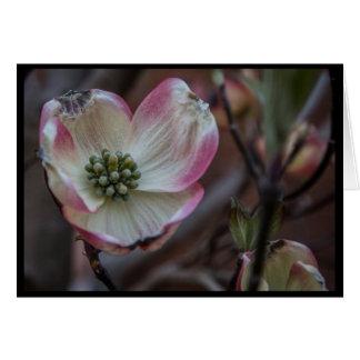 Flor do Dogwood Cartão Comemorativo