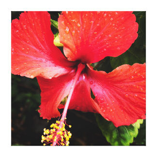 Flor do hibiscus da ilha havaiana