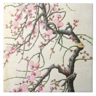 Flor do pêssego (cor no papel)