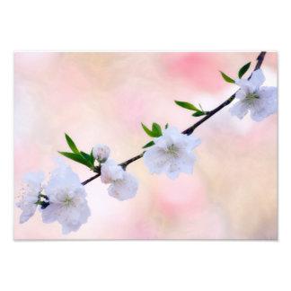 Flor do pêssego impressão de foto