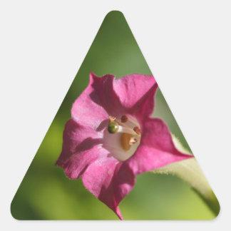 Flor do tabaco (tabacum do Nicotiana) Adesivo Triangular