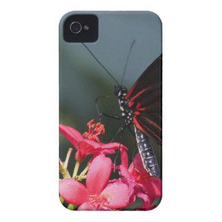 Flor e borboleta mf capas para iPhone 4 Case-Mate