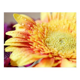 Flor e cartão amarelos das gotas