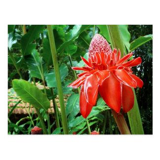 Flor exótica do rosa do caribe do vermelho cartão postal