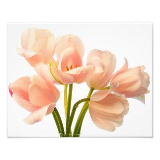 Flor floral branca das tulipas cor-de-rosa do impressão de foto