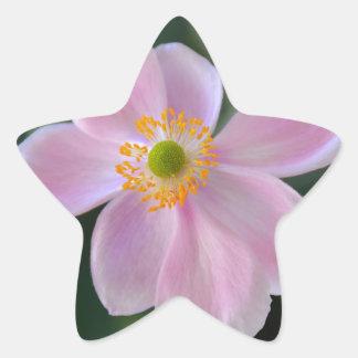 Flor japonesa cor-de-rosa da anêmona adesito estrela