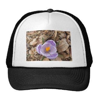 Flor listrada roxa do açafrão boné