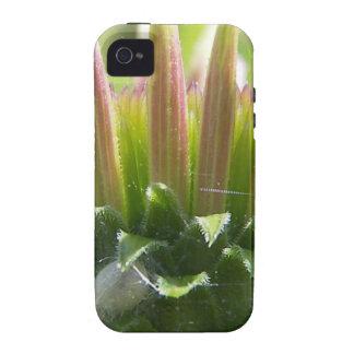 Flor mf 209 capa para iPhone 4/4S