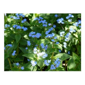 flor, miosótis cartao postal