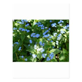 flor, miosótis cartão postal