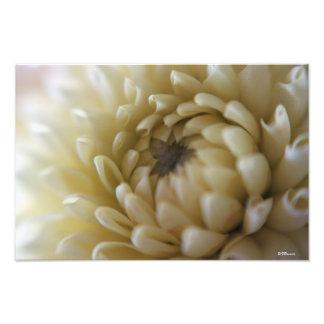 Flor na cor neutra impressão de foto