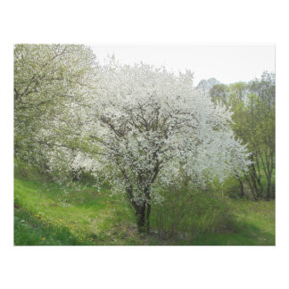 Flor. No branco Impressão De Foto