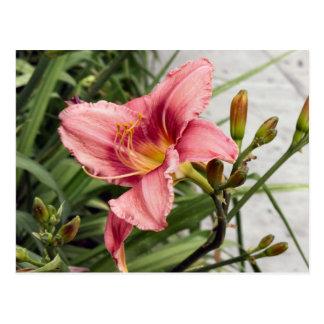 Flor no passeio cartão postal