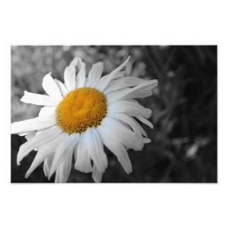 Flor preto e branco fotografias