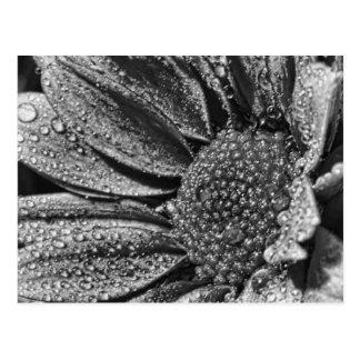 Flor preto e branco com orvalho da manhã, cartão