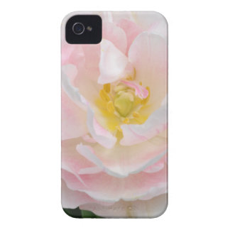 Flor rosa pálido da tulipa capas para iPhone 4 Case-Mate