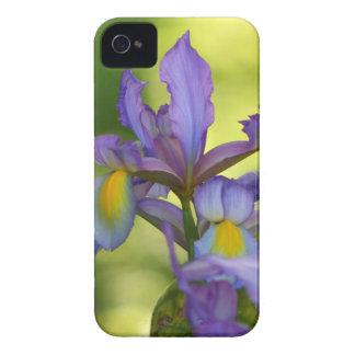 Flor roxa da íris capa para iPhone
