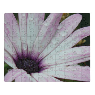 Flor roxa delicada da margarida com pingos de