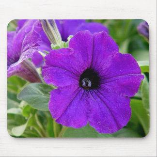 Flor roxa Mousepad dos petúnias