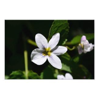 Flor selvagem branca nas montanhas de Sandia Foto Arte