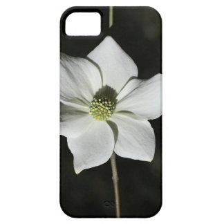 Flor selvagem do Dogwood em Yosemite Capa Barely There Para iPhone 5