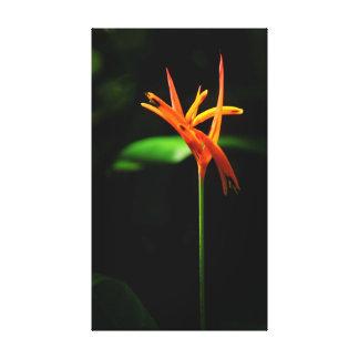 Flor tropical impressão em canvas