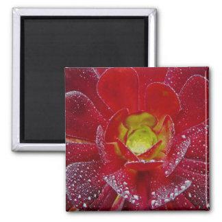 Flor vermelha bonita com gotas da água ímã quadrado