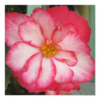 Flor vermelha da flor branca da begónia convite quadrado 13.35 x 13.35cm