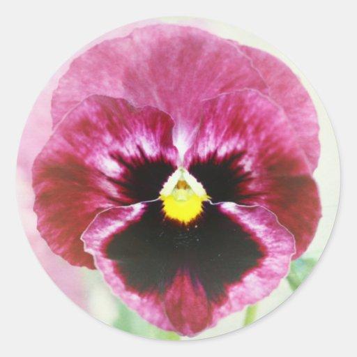 Adesivo De Flor Vermelha ~ Flor vermelha do amor perfeito de Borgonha Adesivo Zazzle