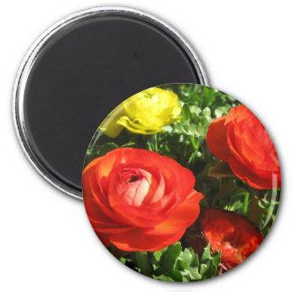 Flor vermelha do ranúnculo ímã redondo 5.08cm