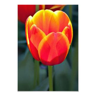 Flor vermelha e amarela brilhante da tulipa no convite personalizado