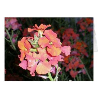 Flor vermelha na noite cartão comemorativo