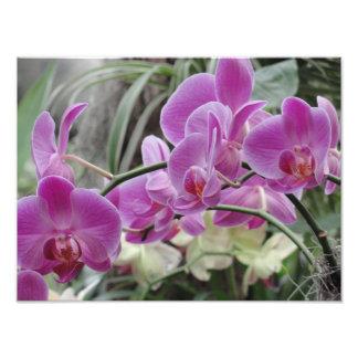 Flora Impressão De Foto