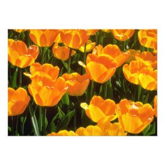 Flores alaranjadas das tulipas convite personalizados