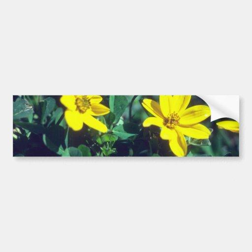 flores amarelas amarelas, fortaleza de Sacsayhuama Adesivos